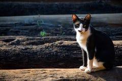 Kattsammanträde på timmer arkivbilder