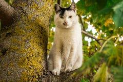 Kattsammanträde på trädet royaltyfri bild