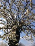 Kattsammanträde på trädfilialer Arkivbilder