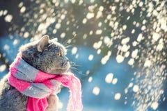 Kattsammantr?de utomhus i den insn?ade vintern under sn?fall royaltyfria bilder