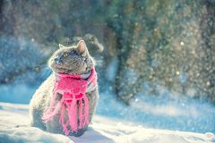 Kattsammantr?de utomhus i den insn?ade vintern under sn?fall royaltyfri fotografi