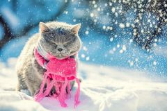 Kattsammantr?de utomhus i den insn?ade vintern under sn?fall arkivbild