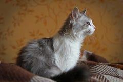 Kattsammanträde i rummet Fotografering för Bildbyråer