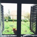 Kattsammanträde på fönstret Arkivfoton