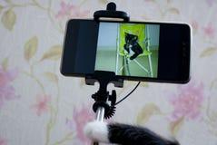 Kattselfie Ett husdjurs perspektiv Arkivfoto