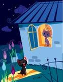 Kattserenad på natten Royaltyfri Foto