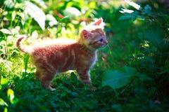 Kattsiesta Royaltyfri Fotografi