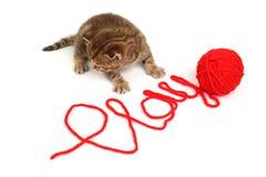 kattspelrum Fotografering för Bildbyråer