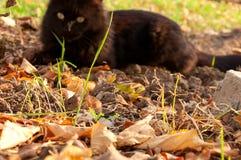 Kattspelrum med en mus Arkivfoto