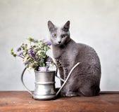 kattstående Royaltyfria Bilder