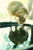 kattstående Fotografering för Bildbyråer