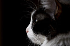 kattstående arkivfoto