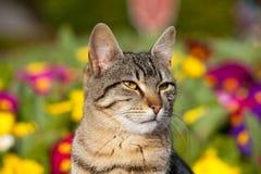 Kattstående i trädgård Arkivbild