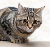 kattstående s Arkivfoton