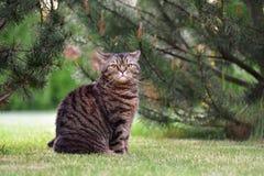 Kattstående utomhus Fotografering för Bildbyråer