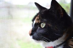 Kattstirranden ut avskärmade fönstret royaltyfria foton