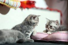 Kattsystrar på en kudde Arkivbilder