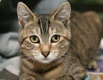 katttabby arkivbilder