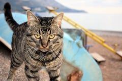 Katttigerfoto arkivfoton