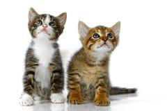kattungar royaltyfria bilder