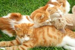 kattungar fotografering för bildbyråer