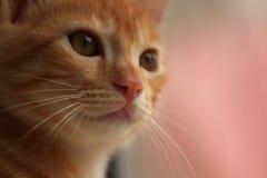 kattungar Arkivfoto