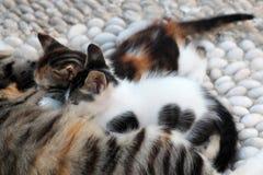 kattungar anhydrous Kunskap av naturen Till och med ögonen av naturen royaltyfri bild