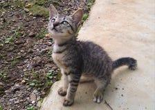 kattungar behöver omsorg från deras mödrar för först de få veckorna av deras liv royaltyfria foton
