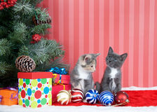 Kattungar bredvid julträd med gåvor och prydnader fotografering för bildbyråer