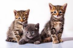 Kattungar grupperar på vit bakgrund Arkivfoton