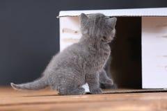 Kattungar i ask Arkivfoto