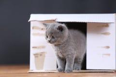 Kattungar i ask Fotografering för Bildbyråer