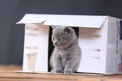 Kattungar i ask Arkivbilder