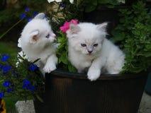 Kattungar i blommaplanter Royaltyfria Bilder