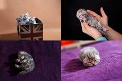 Kattungar i den mänskliga handen, multicam royaltyfria bilder