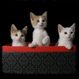 Kattungar i en ask Arkivfoto