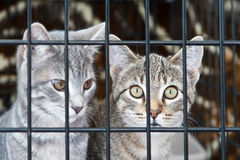 Kattungar i en bur Arkivbilder