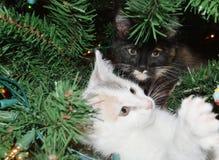 Kattungar i en julgran Arkivfoton
