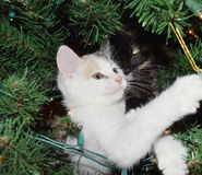 Kattungar i en julgran Arkivbilder
