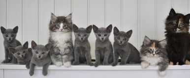 Kattungar i en linje Royaltyfri Foto