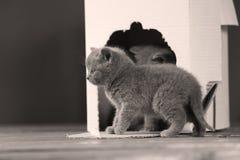 Kattungar i en vit ask Royaltyfria Foton