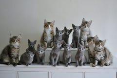 14 kattungar i linje på en skänk Arkivfoton