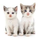 kattungar lilla två Fotografering för Bildbyråer