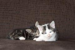 kattungar little Arkivfoton