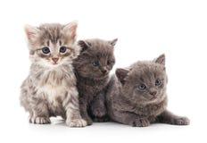 kattungar little tre Royaltyfri Foto