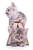 Kattungar med boken Fotografering för Bildbyråer