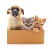 Kattungar och en valp i en ask Arkivfoto