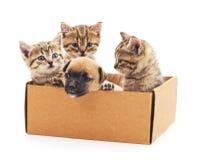 Kattungar och en valp i en ask Royaltyfria Foton