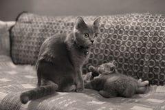 Kattungar och moder på en matta som ser upp Arkivfoto
