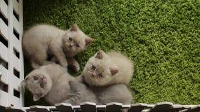 Kattungar på en grön bakgrund arkivfilmer